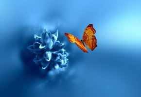 Обои бабочка, цветок, 3d, фон