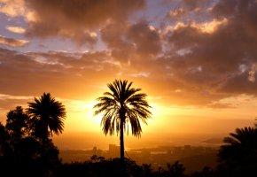 Обои Город, пальмы, закат, облака