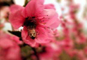 Обои цветок, пчела, макро, пестик