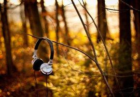 Обои наушники, природа, осень, лес, музыка
