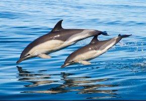 Обои Дельфины, Вода, прыжок, брызги