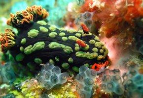 Обои растение, океан, краски, кораллы