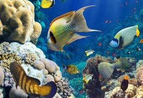 Обои рыбы, океан, кораллы, риф