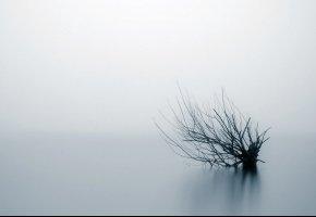 Обои куст, вода, туман, ветки