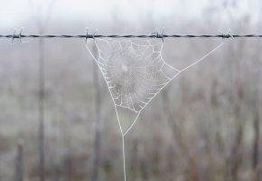 Обои паутина, забор, фон