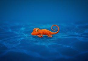 Обои Gecko, Геккон, Ящерица, хвост, лапки