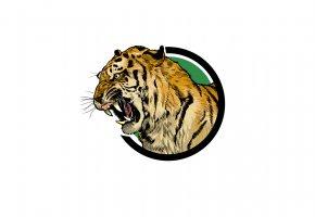 Обои тигр, морда, пасть, рык, клыки