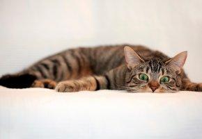 ���� ���, cat, green eyes, funny, �������