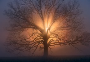 Обои утро, солнце, дерево, ветки, дымка