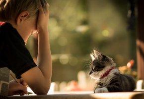 Обои мальчик, кошка, уроки, друзья