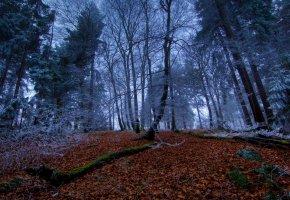 Обои Лес, листья, осень, иней, ветки, деревья