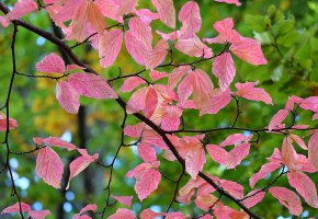 Обои ветка, листья, осень, макро