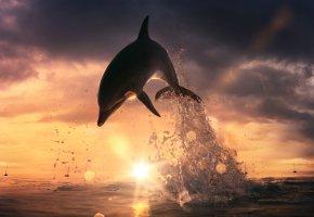 Обои дельфин, закат, облака, горизонт, небо, солнце, вода, море, брызги, прыжок, блики, лучи