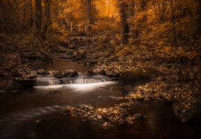 Обои лес, осень, деревья, мостик, речка, листва