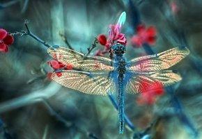 Обои стрекоза, насекомое, макро, крылья, ветка