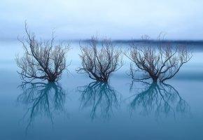 Обои отражения, озеро, деревья, ветки