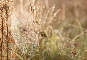 Обои осень, паутина, природа, трава