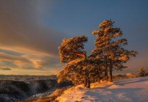 Обои зима, утро, дерево, снег, склон