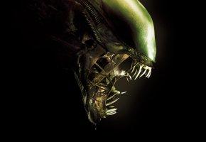Обои film, monster, Alien, movie, head, Чужой, фильм, челюсти