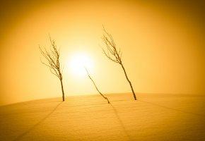 Обои снег, свет, деревья, солнце