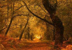 Обои осень, лес, деревья, листва, дорога