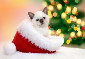 Обои Новый год, Christmas, New Year, шапка, колпак, котёнок, Cats, гирлянда, кошка
