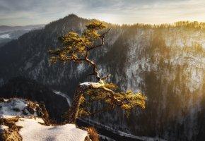 Обои дерево, деревья, зима, снег, горы, свет, утро