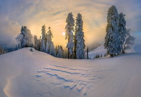 Обои зима, снег, сугробы, деревья, елки