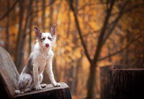 Обои друг, взгляд, собака, лавка, морда, лапы