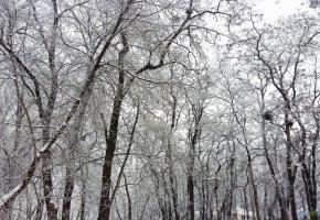 Обои Деревья, ветки, зима, снег, oboitut