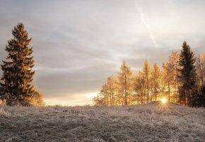 Обои зима, свет, утро, иней, деревья, солнце, лучи