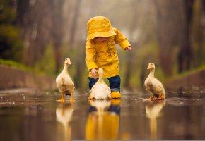 Обои лужа, ребёнок, отражение, малыш, птенцы, птицы, вода, гусята