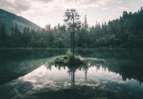 Обои лес, озеро, небо, дерево, ветки, отражение