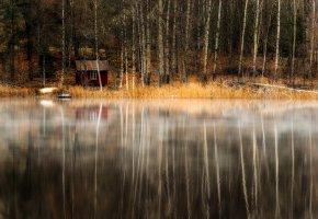 Обои лес, домик, озеро, деревья, берег