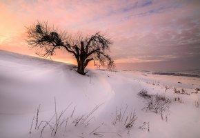 Обои снег, зима, закат, дерево, склон
