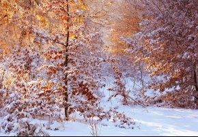 Обои свет, солнечно, листья, снег, деревья, зима