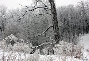Обои Зима, снег, oboitut, лес, деревья, ветки, мороз