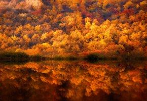Обои осень, деревья, лес, вода, отражения, краски
