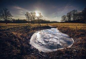 Обои зима, лёд, пруд, утро, деревья, пейзаж