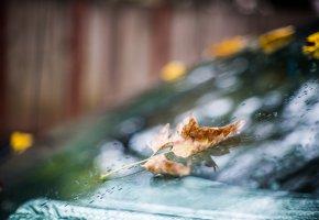 Обои капли, осень, дождь, стекло, лист, боке
