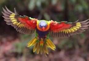 Обои птица, крылья, полёт, перья