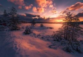 Обои закат, облака, небо, лес, сумерки, деревья, зима, снег