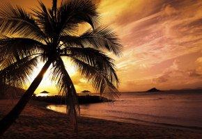Обои пальма, вечер, закат, море, берег, волны, облака