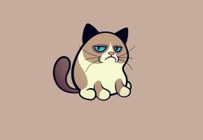 Обои кот, сердитый, котик, cat, кошка