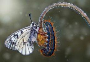 Обои бабочка, гусеница, макро, цветок, крылья