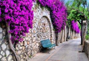 Обои цветы, италия, дорожка, романтика