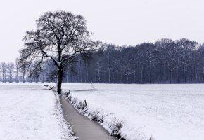 Обои зима, поле, дерево, река, снег, лес