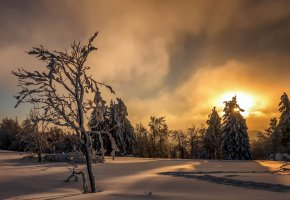 Обои зима, снег, закат, лес, деревья, солнце