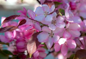 Обои цветение, весна, макро, ветка, листья