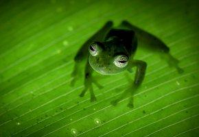 Обои земноводное, природа, лягушка, лапы, зеленая